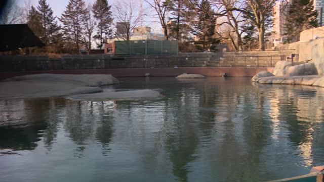 vídeos y material grabado en eventos de stock de chicago, il, u.s. - water reservoir at lincoln park zoo, reopened after months of closure due to covid-19 pandemic. lincoln park zoo reopened to the... - zoológico de lincoln park