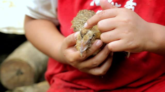 vidéos et rushes de chick est enfant les mains - partie du corps d'un animal