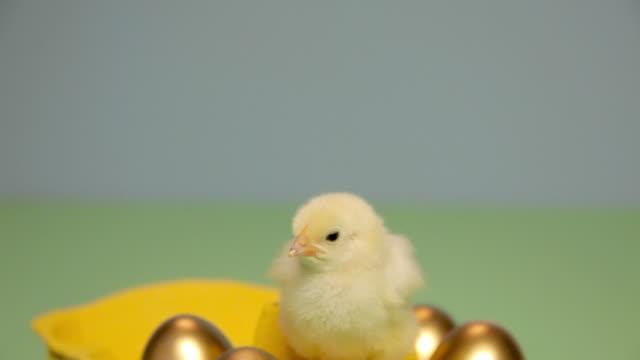 stockvideo's en b-roll-footage met chick standing on box of golden eggs - middelgrote groep dingen