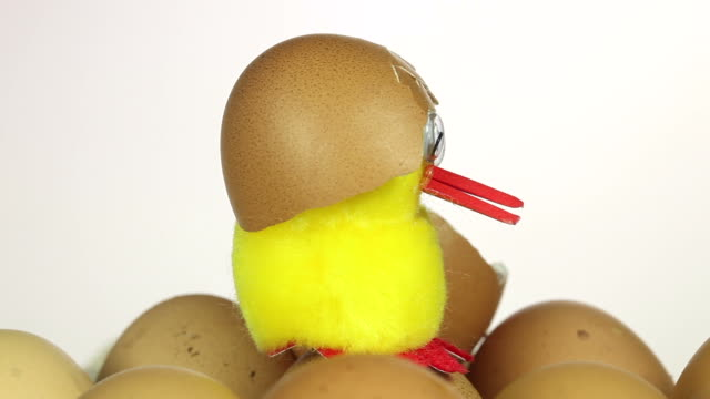 Chick with egg shell on head