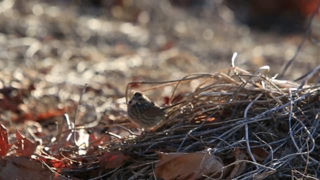 Chickadee birds feeding on seeds during winter season.