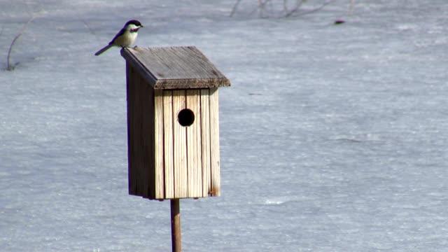 chickadee - birdhouse stock videos & royalty-free footage