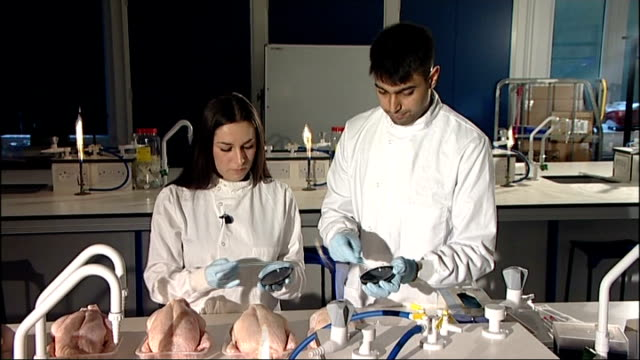 Testing for campylobacter bacteria ENGLAND Surrey University of Surrey INT Swabs being taken from chickens on laboratory surface by lab workers /...