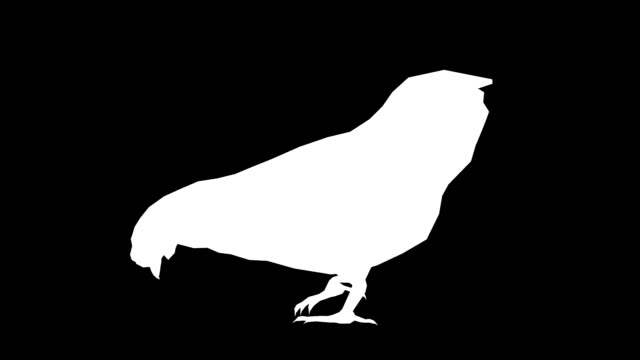 chicken eating animal silhouette (loopable) - matte stock videos & royalty-free footage