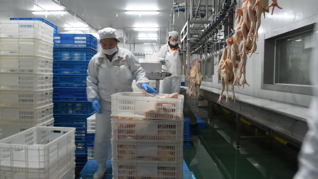 Chicken in Chinese poultry slaughterhouse, China.