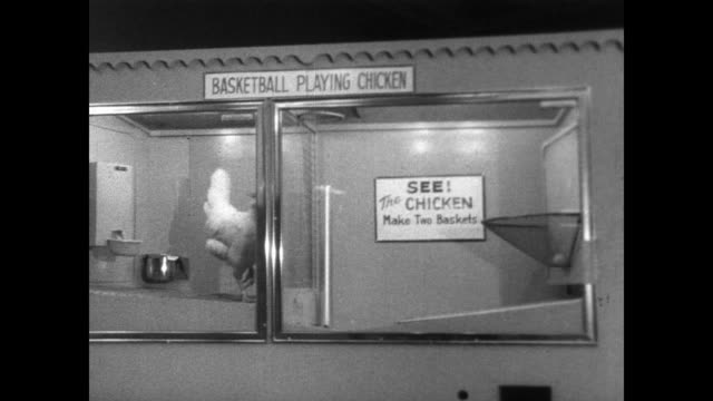 Chicken inside a clear sided box with a sign reading 'BASKETBALL PLAYING CHICKEN' / chicken pecks at ping pong ball hovering on air jet pushing into...