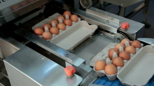 鶏 - 家禽点の映像素材/bロール