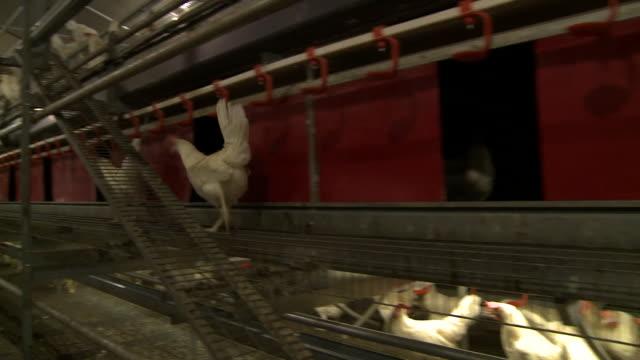 nnbz094h absa627d - chicken coop stock videos & royalty-free footage