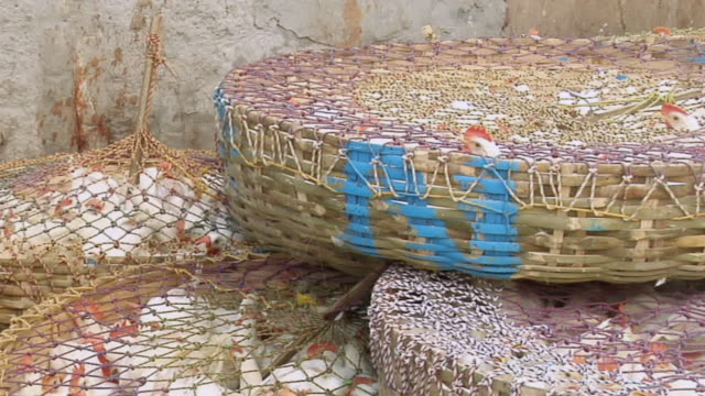 MS PAN Chickens in baskets / Kolkata, West Bengal, India