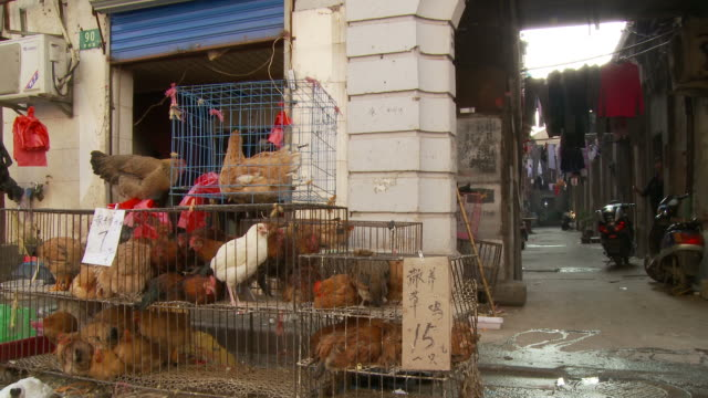 chickens in cages being sold in shanghai china - chicken bird stock videos & royalty-free footage