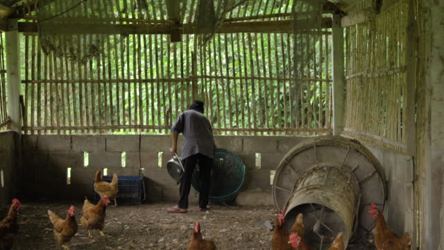 chickens walk around a coop - livestock stock videos & royalty-free footage
