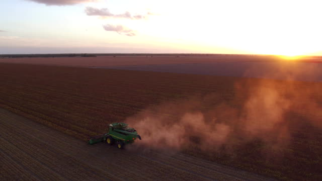 chickpea harvest - queensland stock videos & royalty-free footage