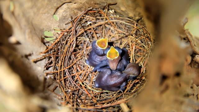 「chicks 」の巣