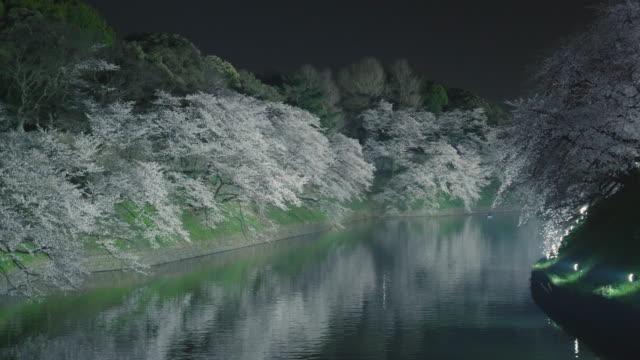 vídeos de stock e filmes b-roll de chidorigafuchi cherry blossom light up - vala