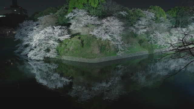 chidorigafuchi cherry blossom light up - 堀点の映像素材/bロール