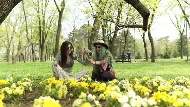 vídeos de stock, filmes e b-roll de cão chihuahua, comendo da mão - cabelo verde