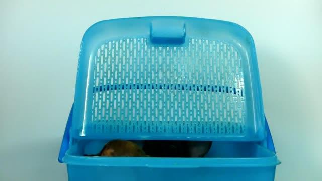かごの中のチワワの子犬 - 動物の頭点の映像素材/bロール