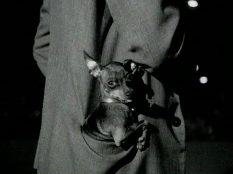 chihuahua sits in the jacket pocket of a man. 1954. - cagnolino da salotto video stock e b–roll