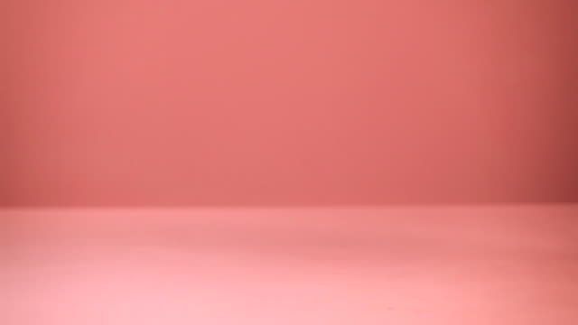 chihuahua walking past camera, pink background - chihuahua dog stock videos and b-roll footage