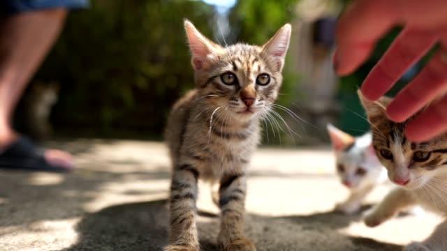 kind und ein senior mann genießen die gesellschaft von katzen in ihrem hinterhof - streicheln stock-videos und b-roll-filmmaterial