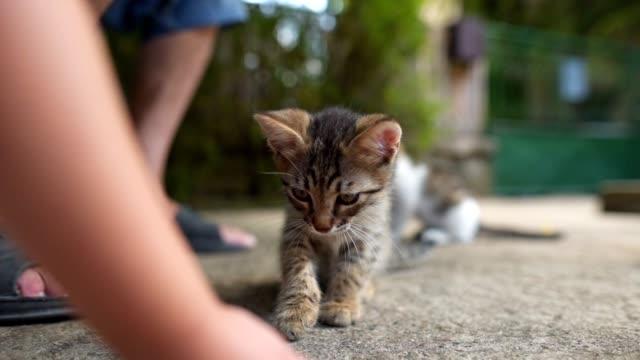 vídeos y material grabado en eventos de stock de un niño y un anciano alimentando gatos al aire libre - un animal