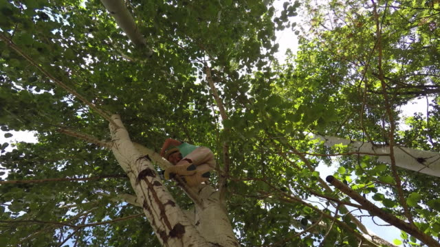 child climbing a tree