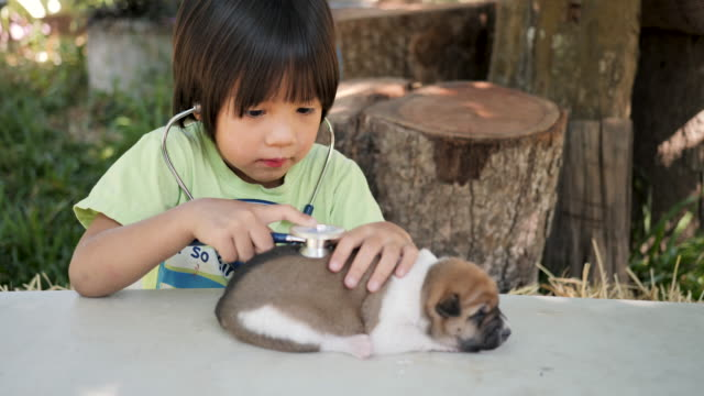 child doctor playing veterinarian with baby dogs. - pets stock videos & royalty-free footage