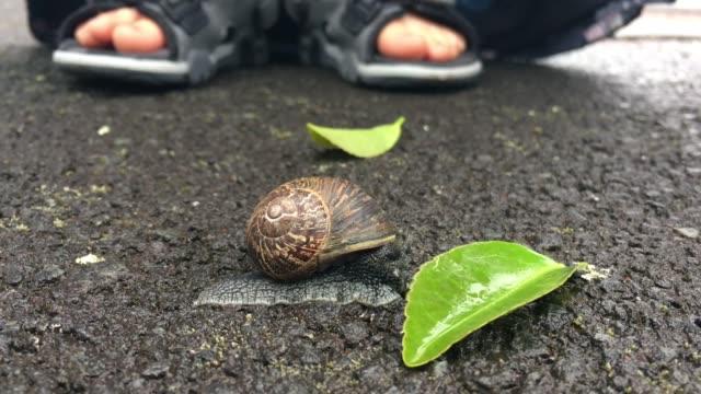 Child Feeding Garden Snail with Green Plant Leaf