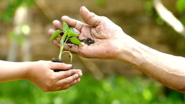 Child give to old man a soil with sapling-slowmotion