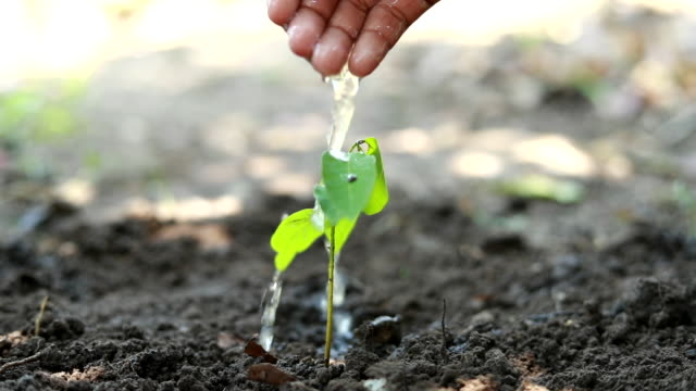 child hand plant watering, boys planting a new tree, concept save the earth, save the world, save planet, ecology concept, slow motion - mineral stock videos & royalty-free footage