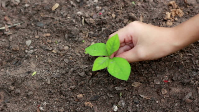 Child Hands Planting a Seed in Ground