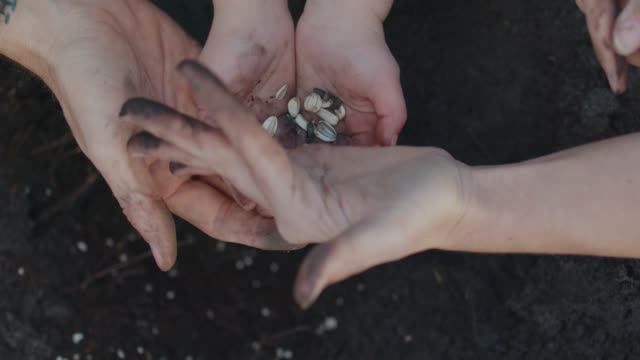 cu of child hands planting seeds in the ground outside with the assistance of adult hands - terreno video stock e b–roll