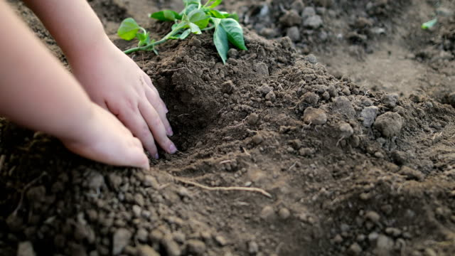 child hands planting young tree on black soil - gardening stock videos & royalty-free footage