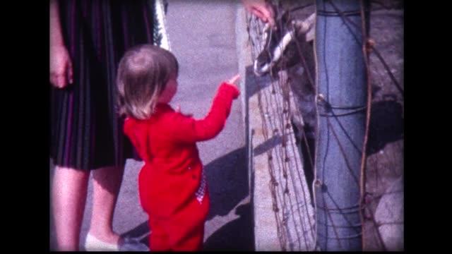 vidéos et rushes de 1963 child in red jump suit meets goat - young animal