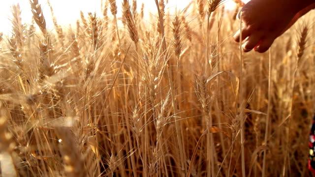 Enfant dans le champ de blé