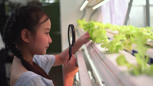 child inspecting hydroponic plant with magnifying glass in plant nursery - lente d'ingrandimento video stock e b–roll