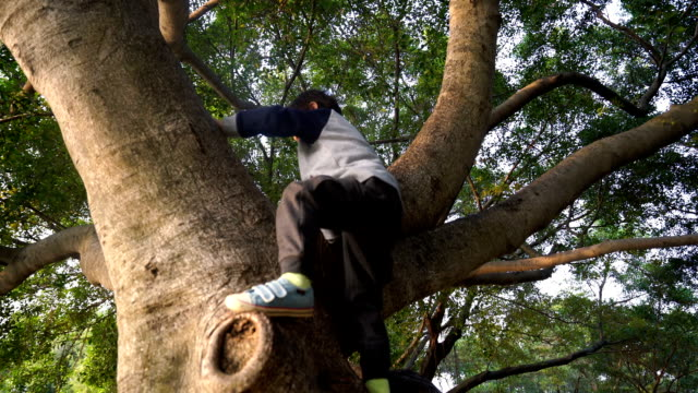 child on a tree - clambering stock videos & royalty-free footage