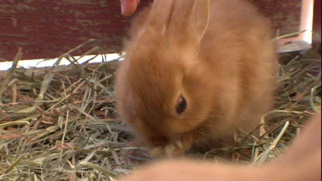 a child pets a domestic rabbit. - käfig stock-videos und b-roll-filmmaterial