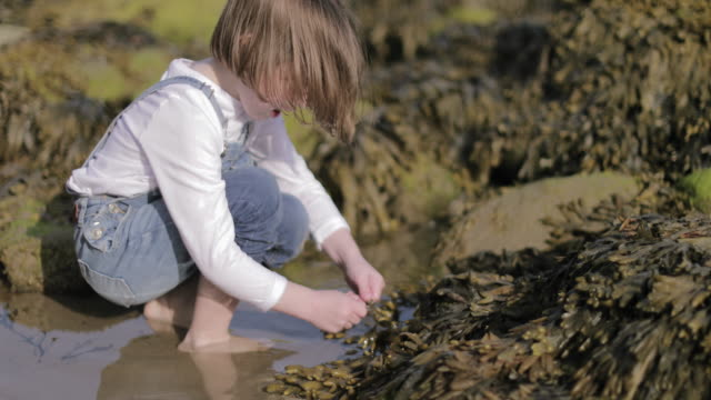 child playing on the beach with seaweed - kent england stock-videos und b-roll-filmmaterial