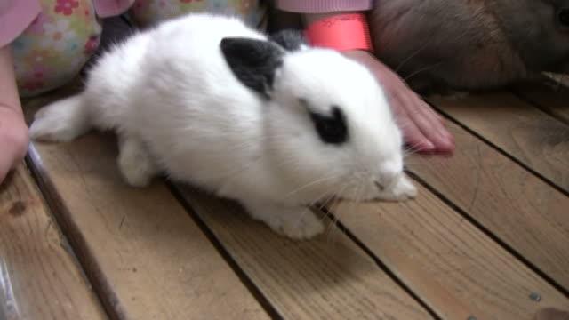 vídeos de stock, filmes e b-roll de hd: criança autorizações bunny coelho - grupo mediano de animales