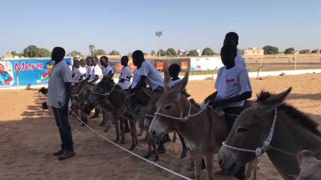 child riders compete during the annual donkey race in thies senegal on april 04 2018 thies governor amadou sy arrives for the race on wednesday - esel stock-videos und b-roll-filmmaterial