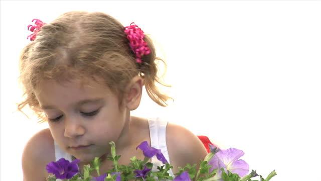 kind riechen blumen - haarzopf stock-videos und b-roll-filmmaterial