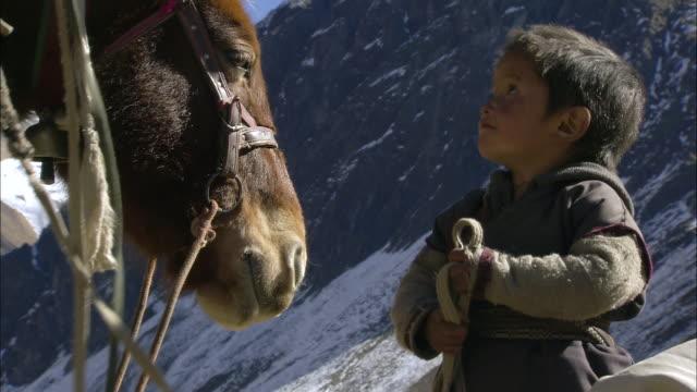 cu child standing near horse at camp / himalayas, upper dolpo, nepal    - arbeitstier stock-videos und b-roll-filmmaterial