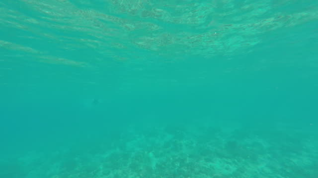 a child swims snorkeling over the coral reef of a tropical island - tahaa island stock videos & royalty-free footage