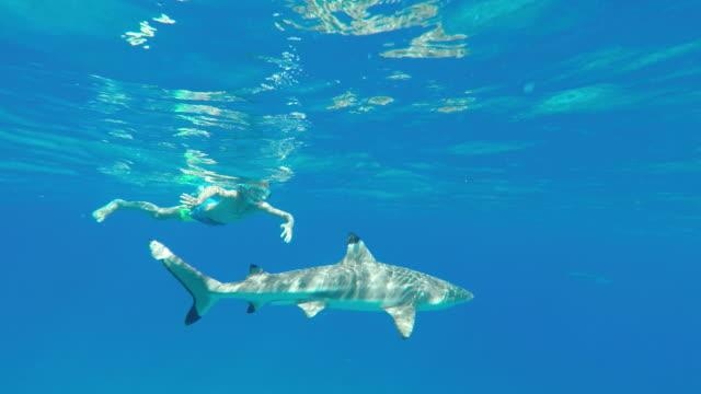 vídeos y material grabado en eventos de stock de child swims under water with a shark - territorios franceses de ultramar