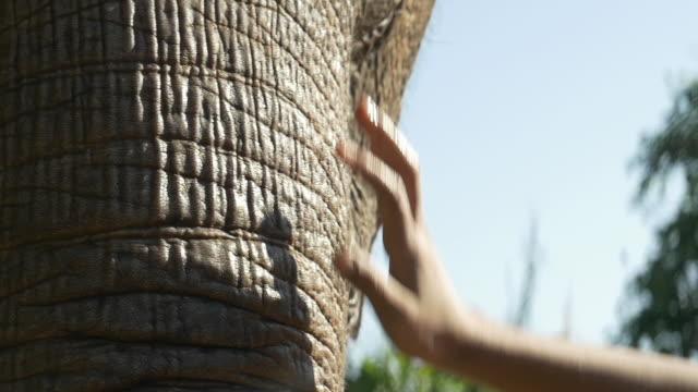 C/U child touching/caressing an elephant