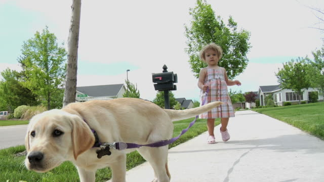 child walking puppy 4 - dog walker stock videos and b-roll footage