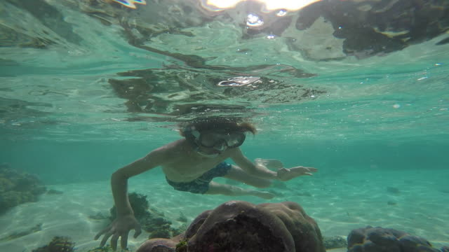 child with mask and snorkel under the sea with fish - huahine island stock videos and b-roll footage