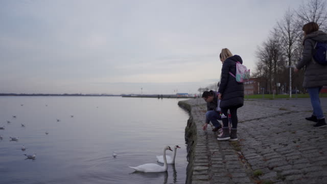 children and parents looking at swans and seagulls - warm clothing stock videos & royalty-free footage