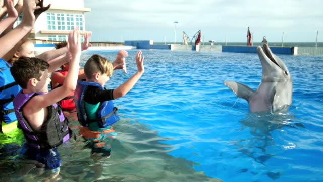 children and trainer in water interacting with dolphin - dolphin stock videos & royalty-free footage